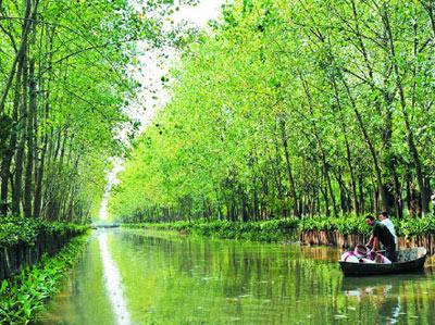 """芜湖跻身""""国家森林城市"""""""
